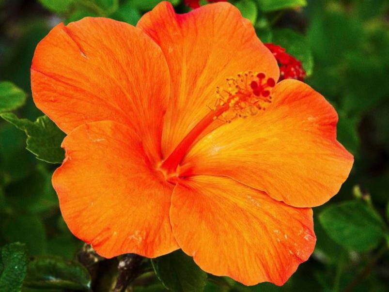 Photographer:web   Power of Spiritual Beauty (Spiritual beauty of Auroville)