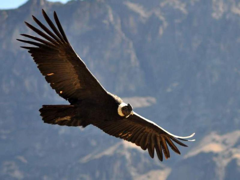 Photographer:web | El Condor y los Andes