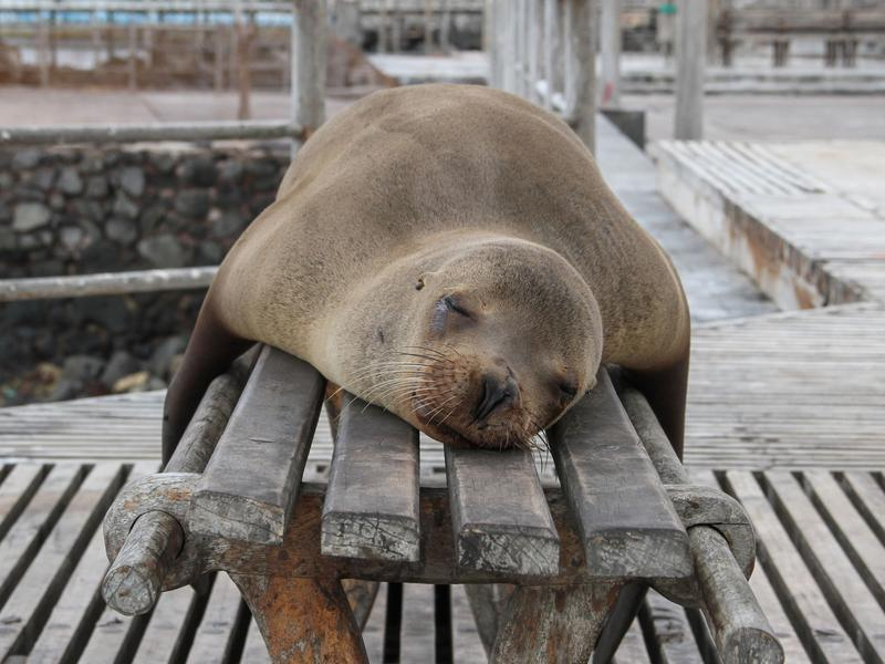Photographer:Jackman Chiu   Sleeping sea lion