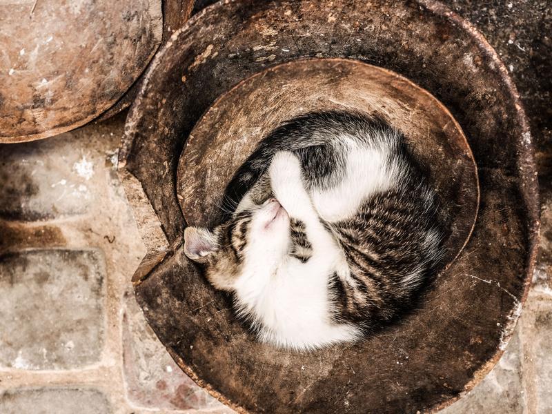 Photographer:Alex Pavlou | Cat in bowl