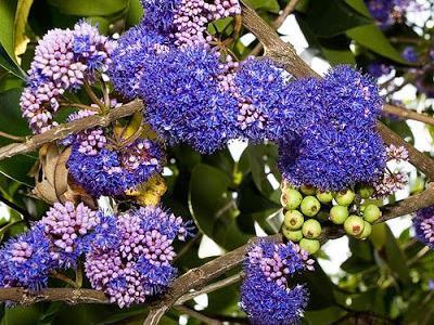 Photographer:www.blossomlikeaflower.com | Miracle Flower