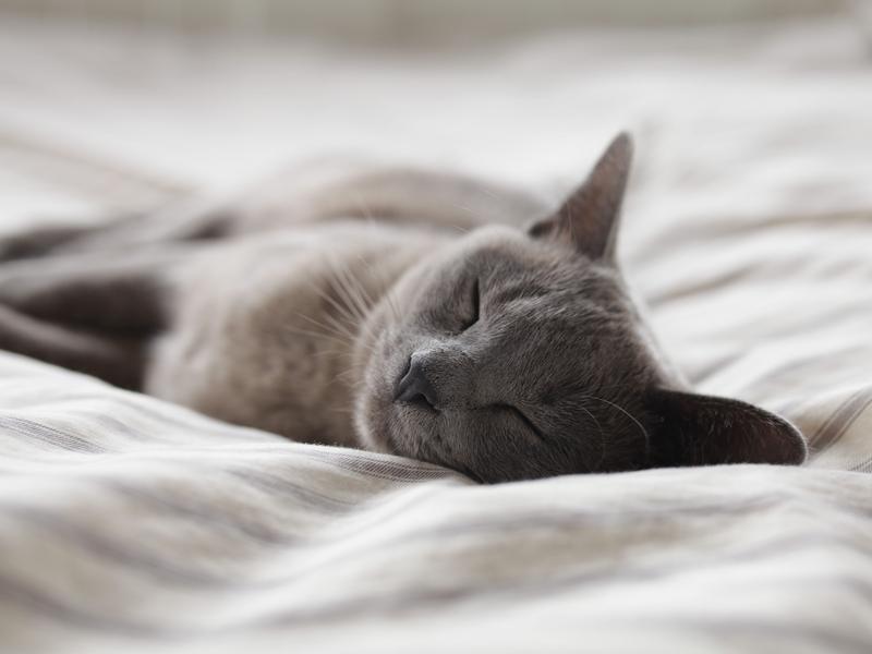 Photographer:Alexander Possingham | Relaxing cat