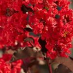 <b>Une série hebdomadaire de lectures par Gangalakshmi (en Français) – 296</b>
