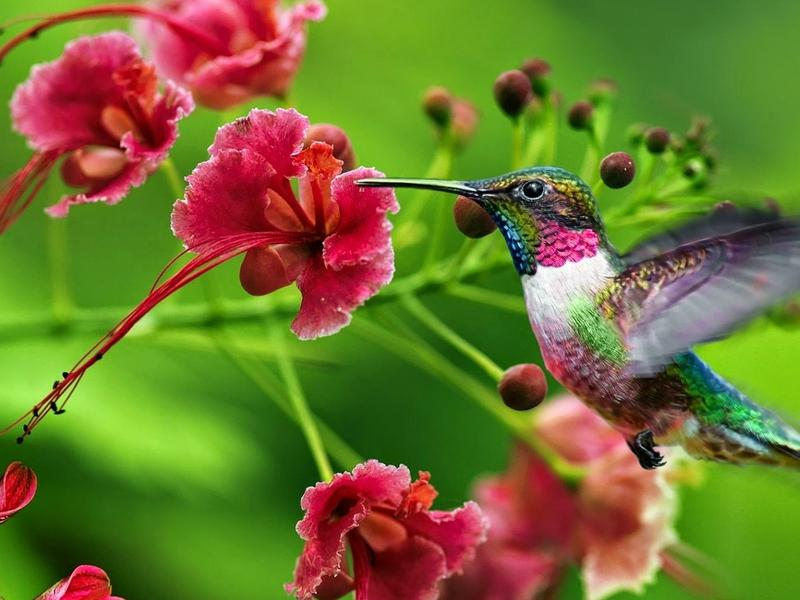 Photographer:web | Bird and flower together