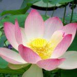 <b>Une série hebdomadaire de lectures par Gangalakshmi (en Français) - 299</b>