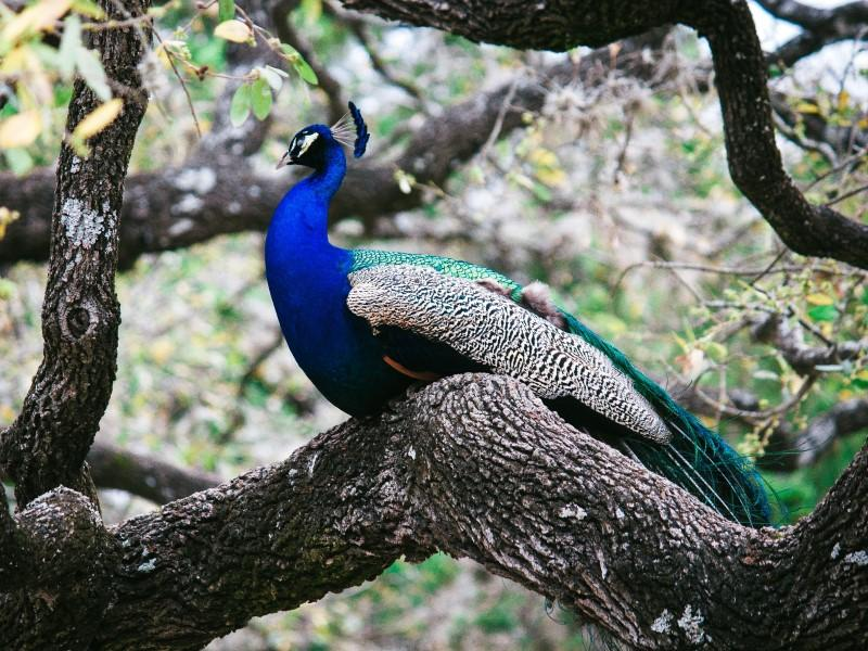Photographer:Brandon Rowe | Peacock