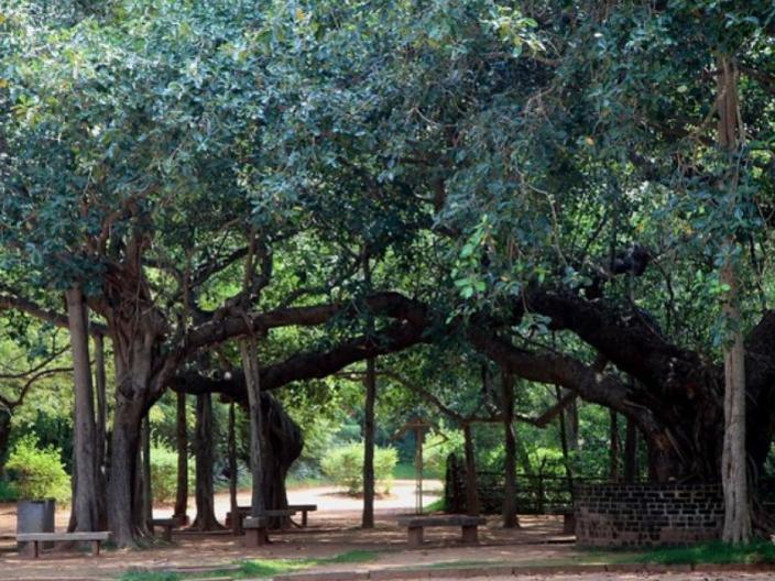 Photographer:NN | Auroville