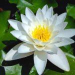 <b>Une série hebdomadaire de lectures par Gangalakshmi (en Français) - 304</b>