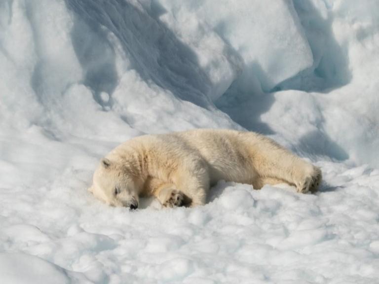 Photographer:Annie Spratt   Polar bear