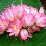 <b>Une série hebdomadaire de lectures par Gangalakshmi (en Français) - 306</b>